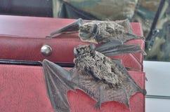 Pequeño palo 22 Foto de archivo
