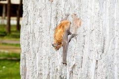 Pequeño palo en el árbol que se mueve hacia abajo Fotos de archivo