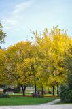 Pequeño parque cubierto con las hojas de otoño Foto de archivo libre de regalías