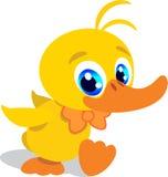 Pequeño pato dulce Fotografía de archivo