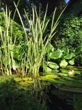 Pequeño pato en un lago de madera Fotografía de archivo libre de regalías