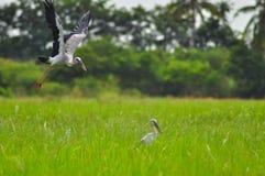 Pequeño pequeño pájaro en hierba Foto de archivo libre de regalías