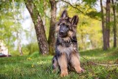 Pequeño perrito curioso Foto de archivo libre de regalías