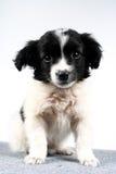 Pequeño perrito del perro. Imagenes de archivo