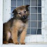 Pequeño perrito del retrato Imagen de archivo