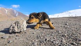 Pequeño perrito divertido en el paso de montaña nevado fotografía de archivo