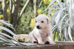 Pequeño perrito en el jardín Imagenes de archivo
