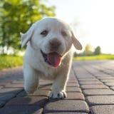 Pequeño perrito en la acción fotografía de archivo