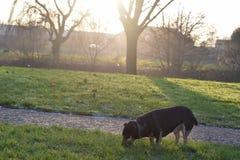 Pequeño perrito en la puesta del sol imagen de archivo libre de regalías