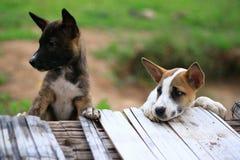 Pequeño perrito lindo Foto de archivo libre de regalías