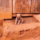 Pequeño perrito lindo Imagenes de archivo