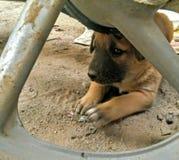 Pequeño perrito lindo Imagen de archivo libre de regalías