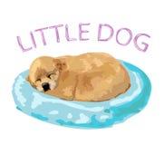 Pequeño perrito lindo que duerme en la almohada rosada Imagen de archivo libre de regalías