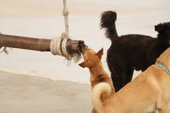 Pequeño perrito lindo que mastica la conexión la playa fotos de archivo