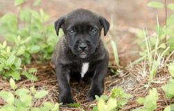 Pequeño perrito negro lindo, fotografía de la adopción del rescate del animal doméstico Imágenes de archivo libres de regalías