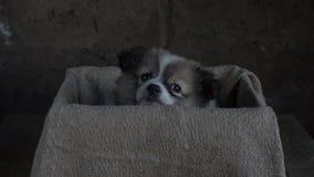 Pequeño perrito que se sienta en una caja