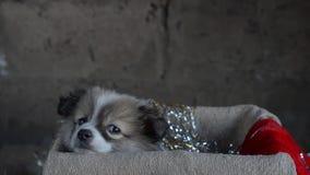 Pequeño perrito que se sienta en una caja metrajes