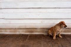 Pequeño perrito sin hogar Imagenes de archivo