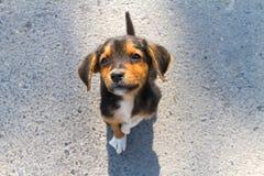 Pequeño perrito solo abandonado Imagen de archivo