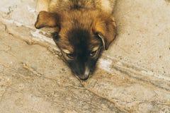 Pequeño perrito solo abandonado, foto teñida Imagen de archivo