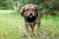 Pequeño perrito triste lindo al aire libre en la hierba verde Imagenes de archivo