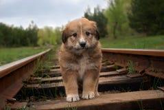 Pequeño perrito triste lindo en ferrocarril Al aire libre foto Fotografía de archivo