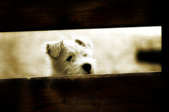 Pequeño perro Imagen de archivo libre de regalías