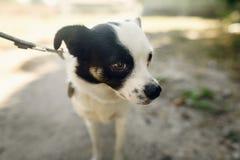 Pequeño perro asustado lindo del refugio que presenta afuera en parque soleado Imágenes de archivo libres de regalías