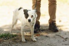 Pequeño perro asustado lindo del refugio que presenta afuera en parque soleado Fotos de archivo
