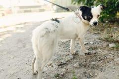 Pequeño perro asustado lindo del refugio que presenta afuera en parque soleado Fotografía de archivo libre de regalías
