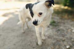 Pequeño perro asustado lindo del refugio que presenta afuera en parque soleado Imagenes de archivo