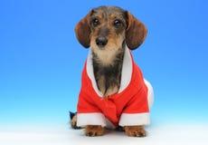 Pequeño perro basset en la capa de Papá Noel Fotos de archivo