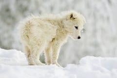 Pequeño perro blanco al aire libre en invierno Foto de archivo libre de regalías