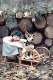 Pequeño perro con el juguete del muñeco de nieve que se sienta en el trineo adornado de madera, en el backgroung de madera y Papá Fotos de archivo libres de regalías
