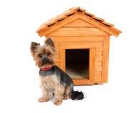Pequeño perro con la casa de perro de madera Foto de archivo
