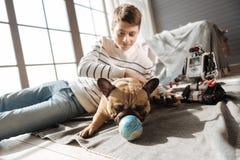 Pequeño perro con los oídos rectos que juegan con la bola Imagenes de archivo