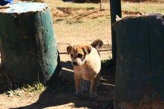 Pequeño perro de perrito Fotos de archivo libres de regalías