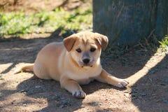 Pequeño perro de perrito Imagenes de archivo