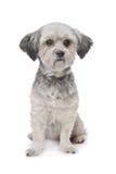 Pequeño perro del nacido en el baby-boom Imagenes de archivo