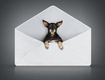 Pequeño perro divertido en cubierta del poste fotografía de archivo libre de regalías