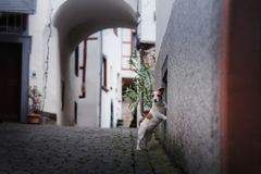 Pequeño perro en la ciudad vieja Un animal doméstico en la ciudad foto de archivo
