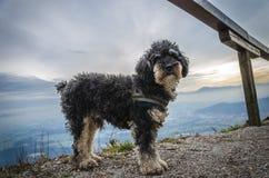 Pequeño perro en montañas Foto de archivo libre de regalías