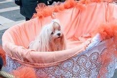 Pequeño perro en una cesta, Venecia, Italia Foto de archivo libre de regalías