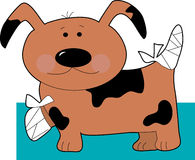 Pequeño perro en vendajes Imagenes de archivo