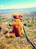Pequeño perro encima de una montaña Fotografía de archivo libre de regalías