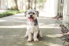 Pequeño perro lindo de la mezcla del perro en fondo gris fotografía de archivo