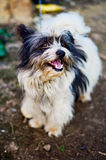 Pequeño perro lindo divertido Imagen de archivo