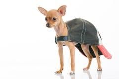 Pequeño perro lindo en casquillo Foto de archivo libre de regalías
