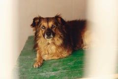 Pequeño perro lindo en la jaula con los ojos tristes, momento emocional del refugio, Imagenes de archivo