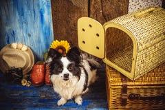 Pequeño perro listo por días de fiesta Fotografía de archivo